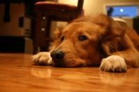 Chem-Dry Loves Pets