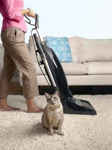 Kitty helps vacuum